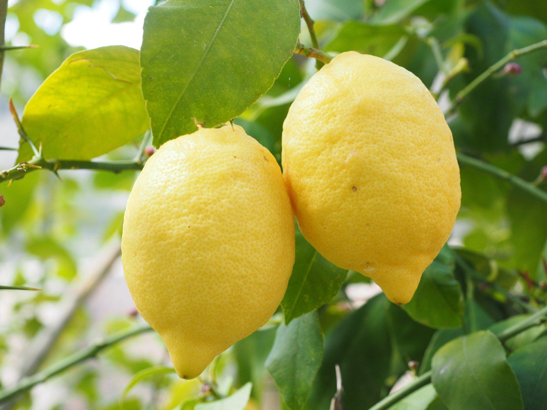 Recipe for Limoncello